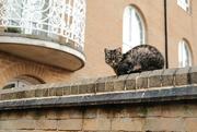 17th Nov 2020 - Cat on a Wall