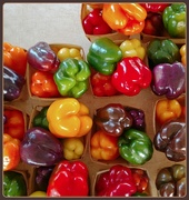 26th Sep 2020 - Peppers: Fall 2020