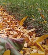 28th Sep 2020 - Leaves 2 - Fall 2020