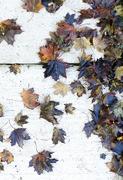 29th Sep 2020 - Leaves 3 - Fall 2020