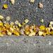 Leaves 4 - Fall 2020
