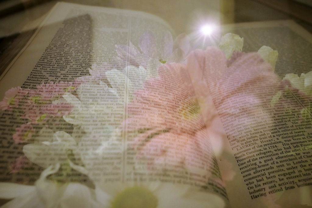 Flower and book by photopedlar