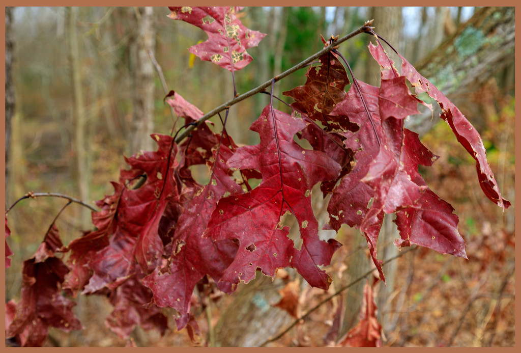 Leaves with Holes by hjbenson