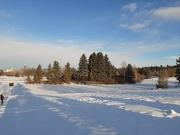 22nd Nov 2020 - Winter Landscape