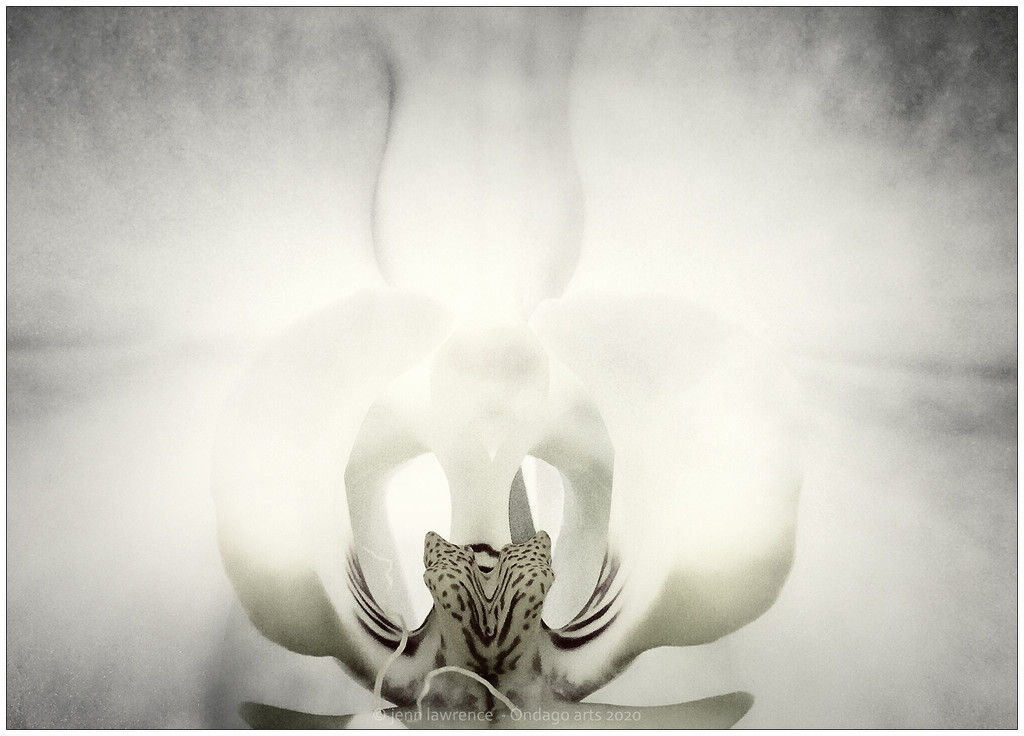 Heart of an Orchid by aikiuser