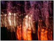20th Nov 2020 - Trees on Fire