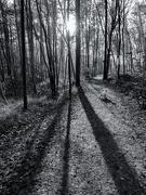 23rd Nov 2020 - Squirrel hunt