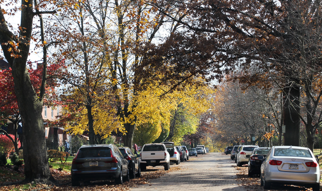 Street with trees and cars by mittens