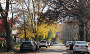 23rd Nov 2020 - Street with trees and cars