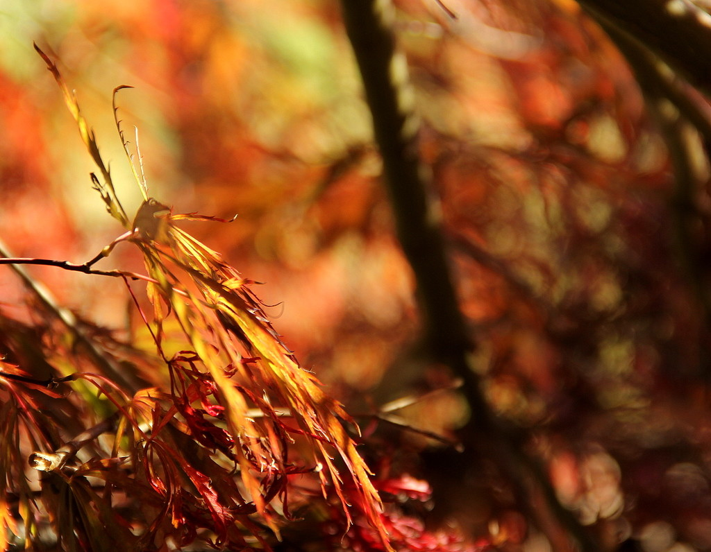 Clinging to Fall by calm