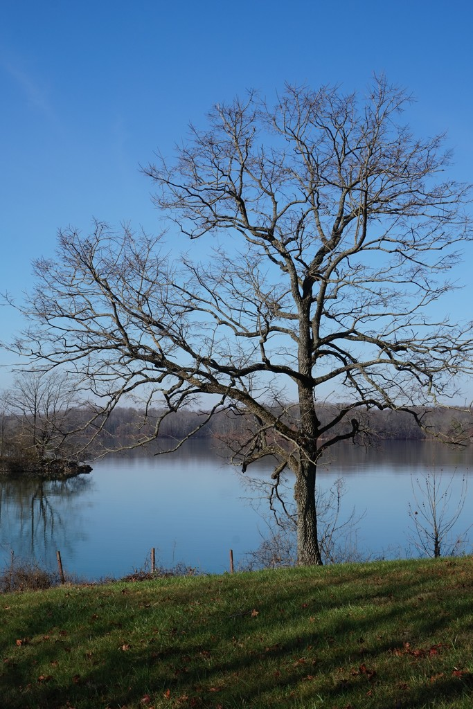 Bare trees can be beautiful by tunia