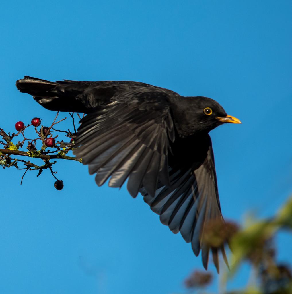 Fly Away by ilovelenses
