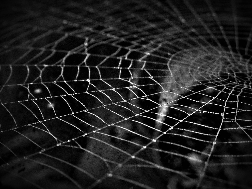 Web in Black & White by granagringa