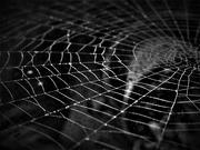 12th Nov 2020 - Web in Black & White