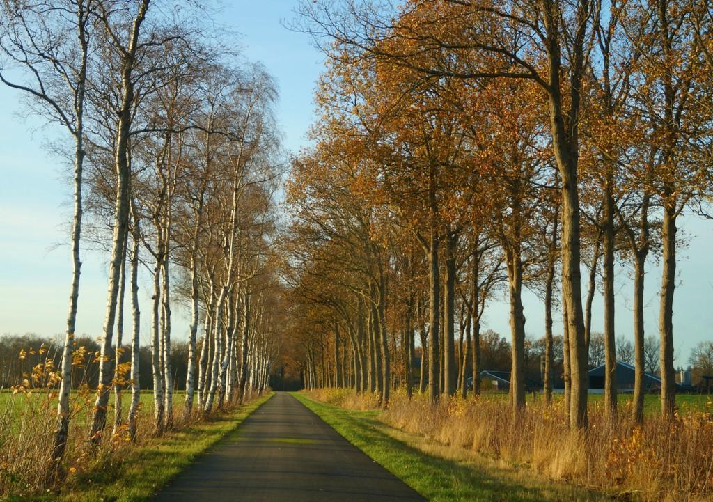 country road by gijsje