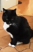 23rd Nov 2020 - Arthur our dear feline friend.