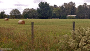 24th Nov 2020 - Painted field 2...