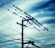 24th Nov 2020 - The Birds Will Wing