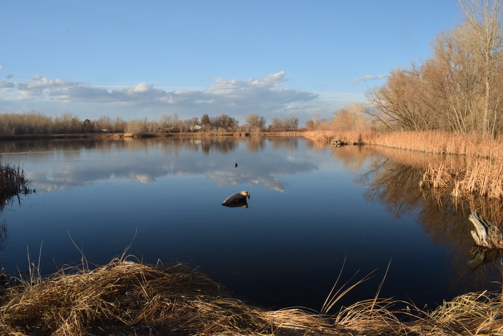 North Shields Natural Area West Pond by sandlily