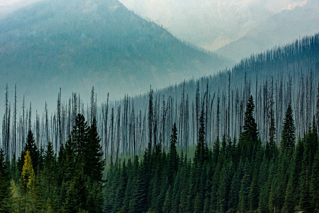Wildfires at the Park of 2015 by farmreporter
