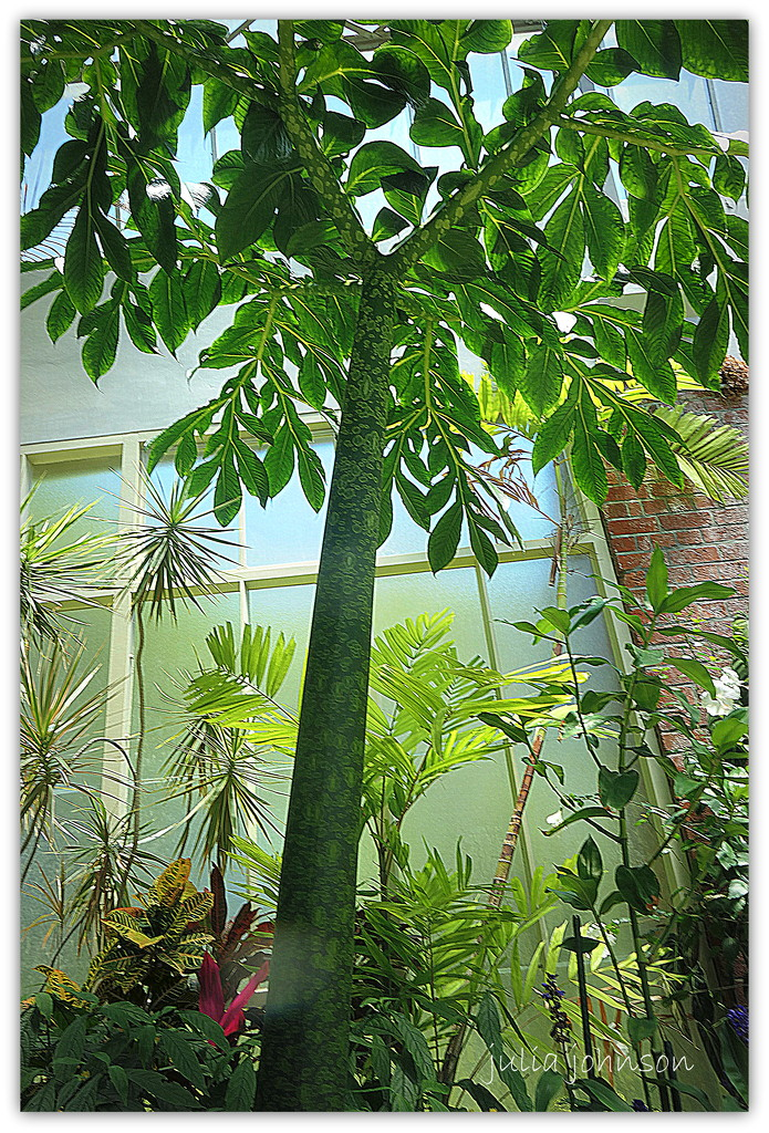 Corpse Plant... by julzmaioro