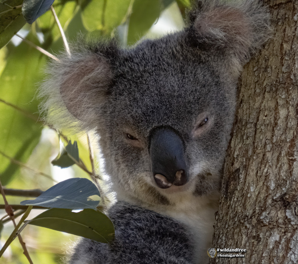 a cool spot by koalagardens