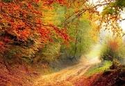 24th Nov 2020 - Autumn