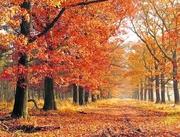 23rd Nov 2020 - Autumn2