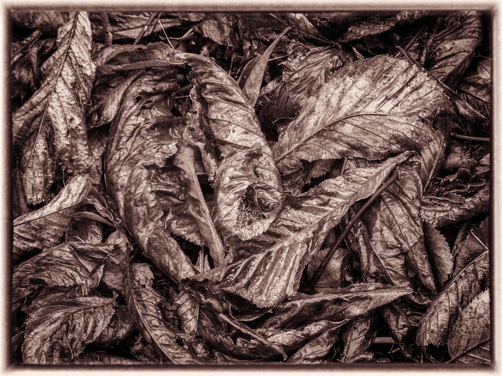 Leaves have fallen from the trees by haskar