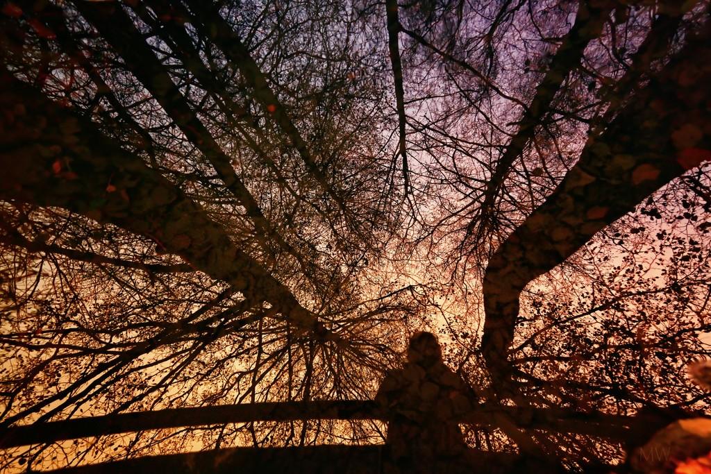 2020-11-24 tree canopy by mona65