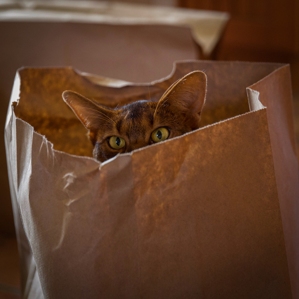 A bag of Merry by berelaxed