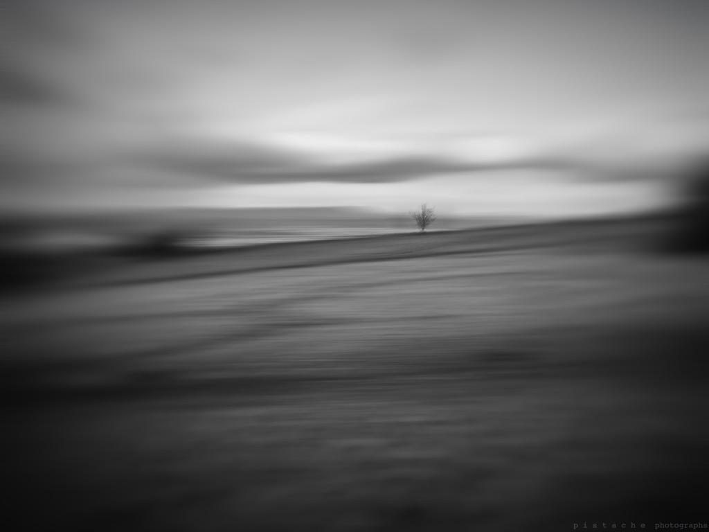 lone by pistache