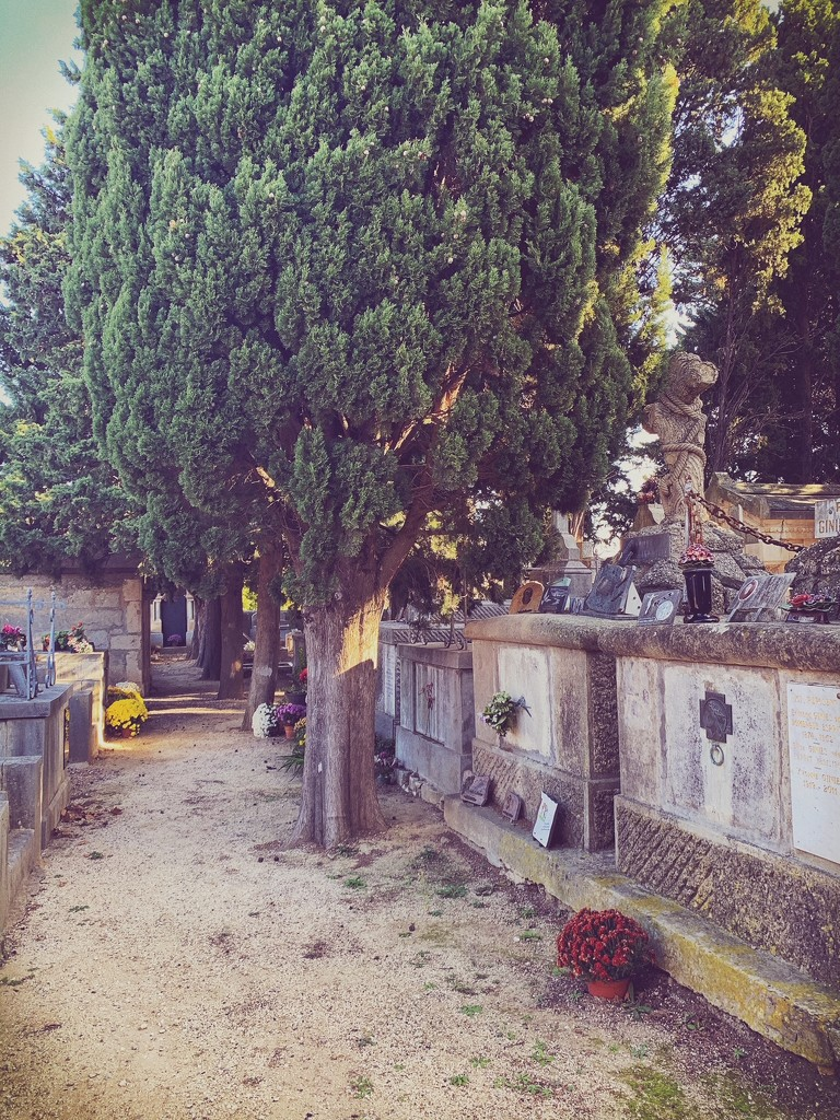 Cemetery of Saint André.  by cocobella