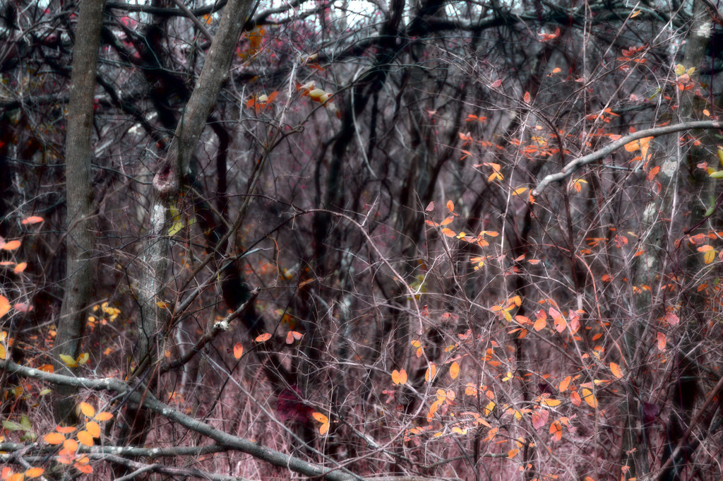 more trees by francoise