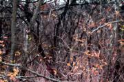 14th Nov 2020 - more trees