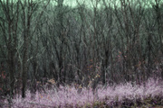 15th Nov 2020 - trees
