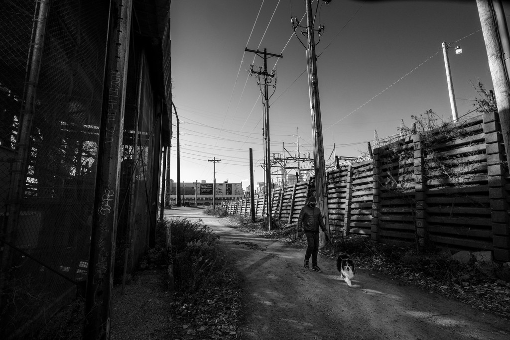 Walking the Dog by tosee