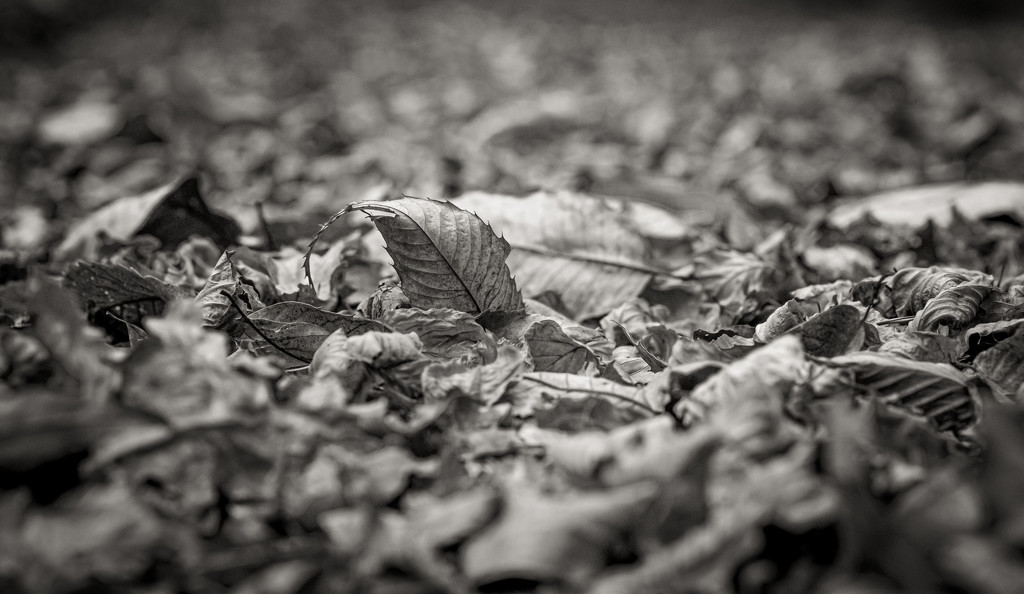 Forest Floor by vignouse