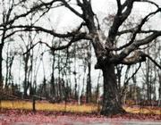 16th Nov 2020 - single tree
