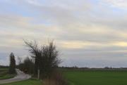 24th Nov 2020 - Wind protection hedges.