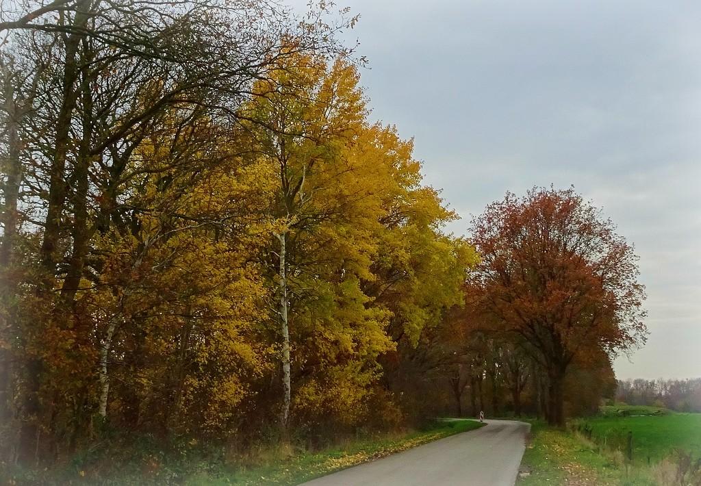 autumn by gijsje