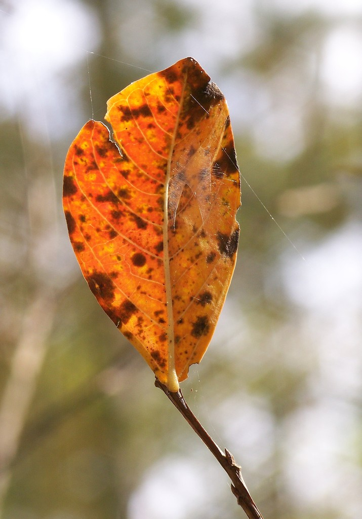 A single leaf... by marlboromaam