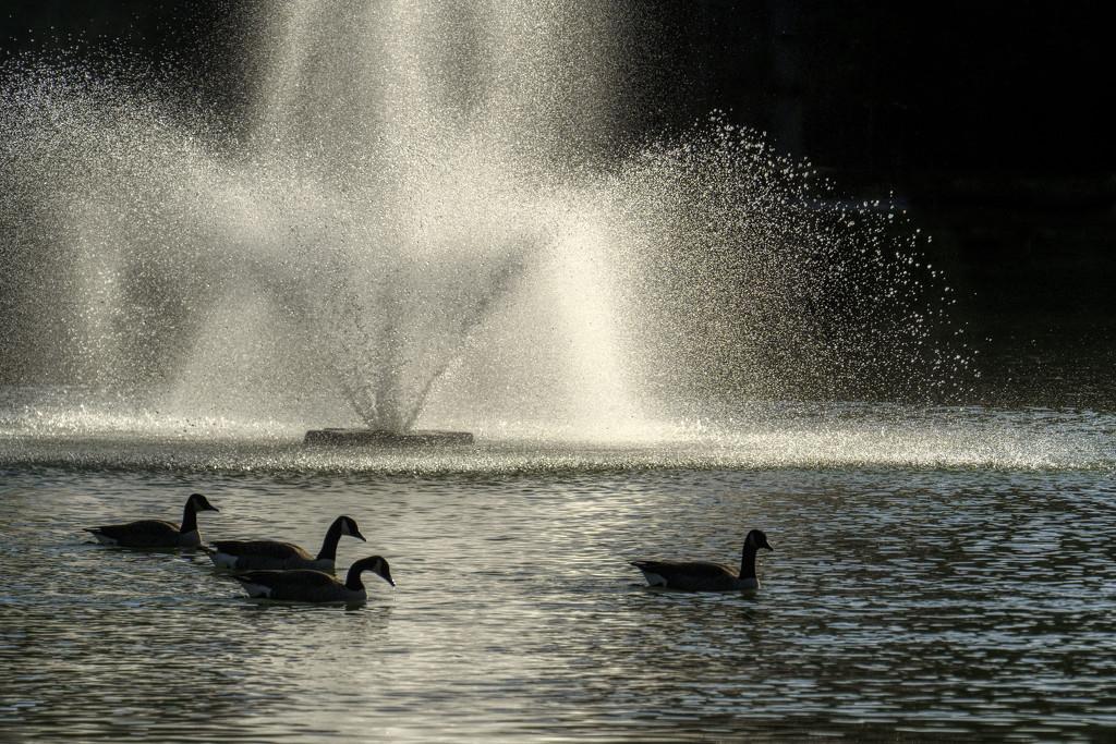 Friends Flock Together by kvphoto
