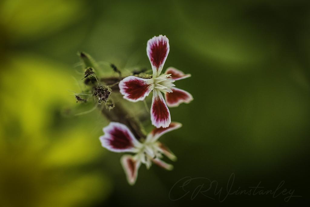 Wild Flower by kipper1951