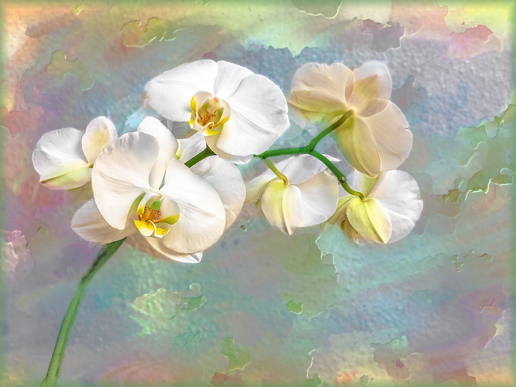Orchids in pastels by ludwigsdiana