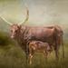 Ankole calf having a drink