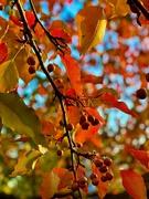 25th Nov 2020 - Bright Autumn Day