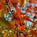 Bright Autumn Day by gardenfolk