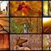 Fall Facebook Cover