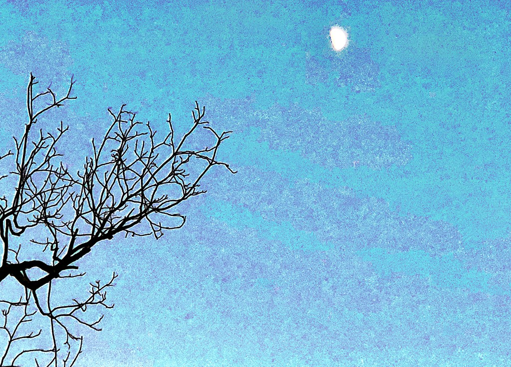 Moon and bare branches by congaree